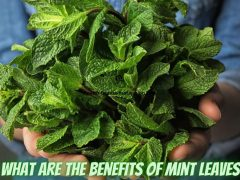 What Are The Benefits Of Mint Leaves